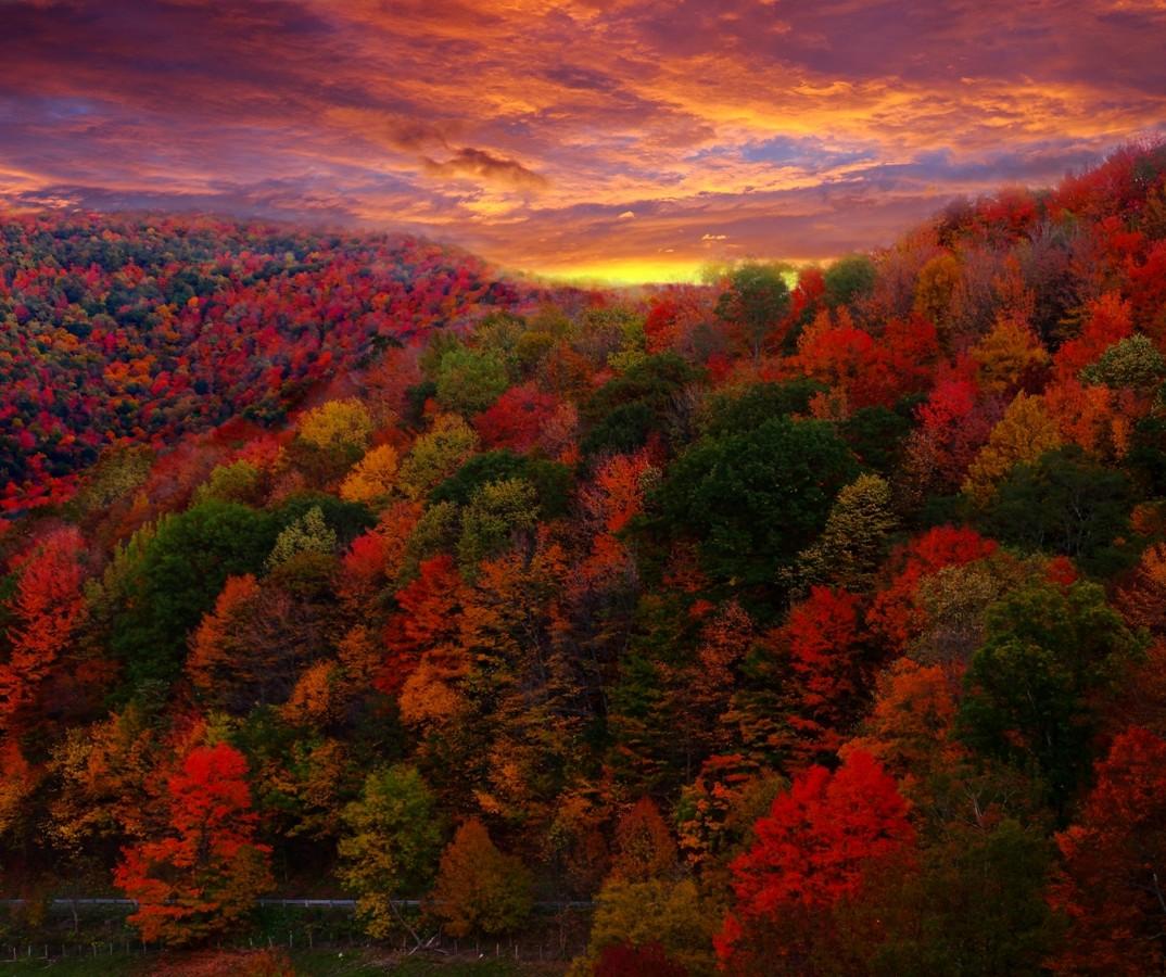 despite florence carolinas on track for fantastic fall color season