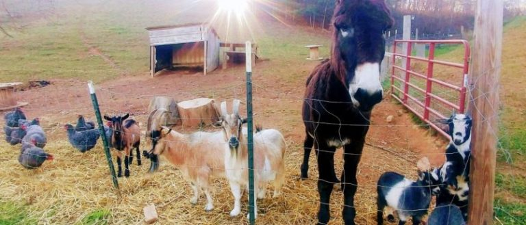 A menagerie of animals at Franny's Farm.