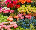 A collection of flowers in a garden.