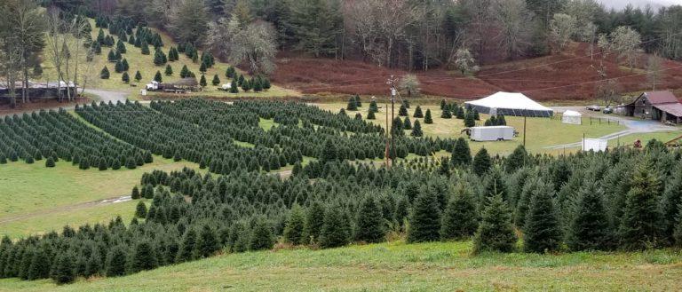 Tom Sawyer's Christmas Tree Farm and Elf Village - Tom Sawyer's Christmas Tree Farm And Elf Village - Asheville.com