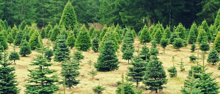 a christmas tree farm - Christmas Tree Farm Asheville Nc