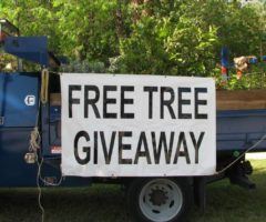 A sign on the side of a truck which reads 'free tree giveaway.'