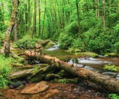A downed tree at Cold Springs Creek in Pisgah National Forest.