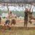 Asheville Hosts Spartan Races August 4-5