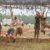 Asheville Hosts Spartan Races August 4-5