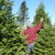 Buncombe County Offers Christmas Trees for Sale